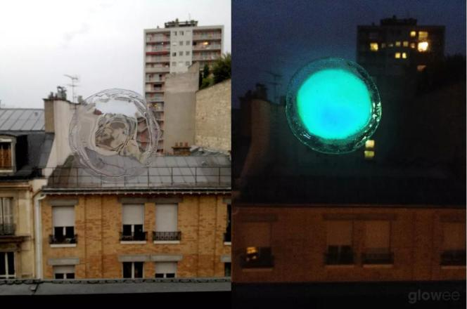 Glowee est un système vivant de bioéclairage sans consommation d'électricité ni émission de pollution lumineuse.