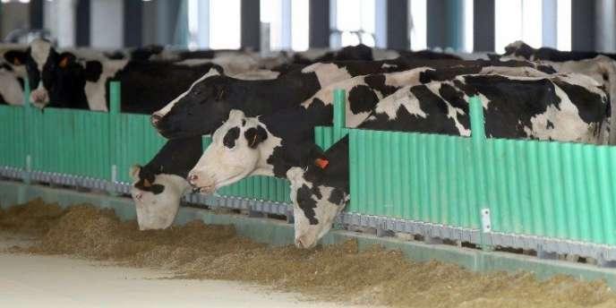 L'élevage compterait déjà 796 vaches.
