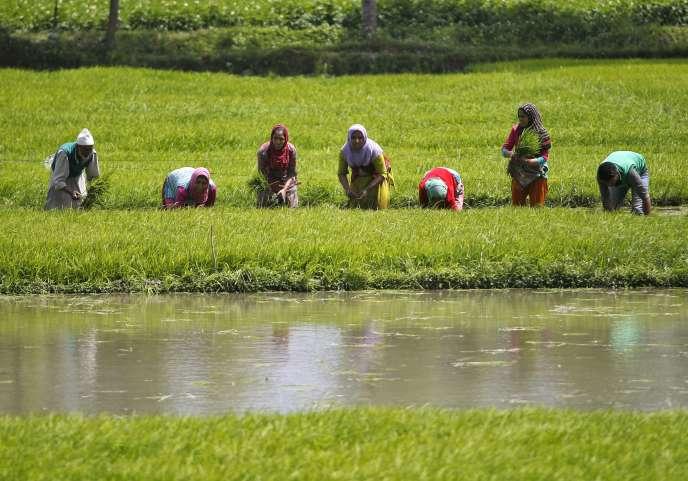Après le système aquifère arabique, le bassin aquifère indien, dans le nord-ouest de l'Inde et au Pakistan, est le second plus sur-utilisé dans le monde.