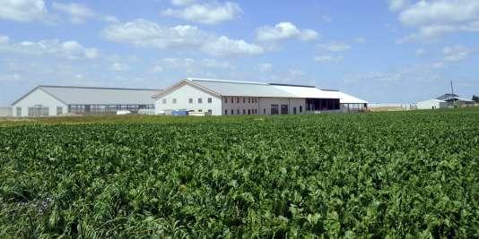 La ferme des 1 000 vaches située à Drucat, à côté d'Abbeville (Somme).