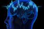 Un cerveau humain en 3D haute résolution.