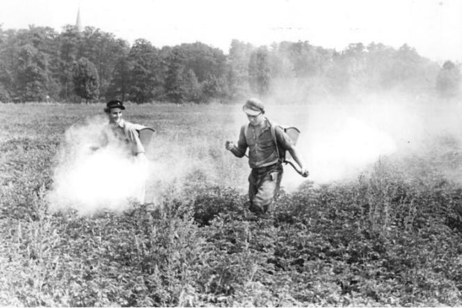 Traitement d'un champ de pommes de terre au DDT, en Allemagne de l'Est, en 1953.