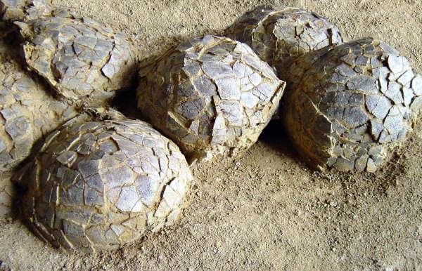 A Mèze, dans l'Hérault, se trouve un gisement d'œufs de dinosaures exceptionnel.