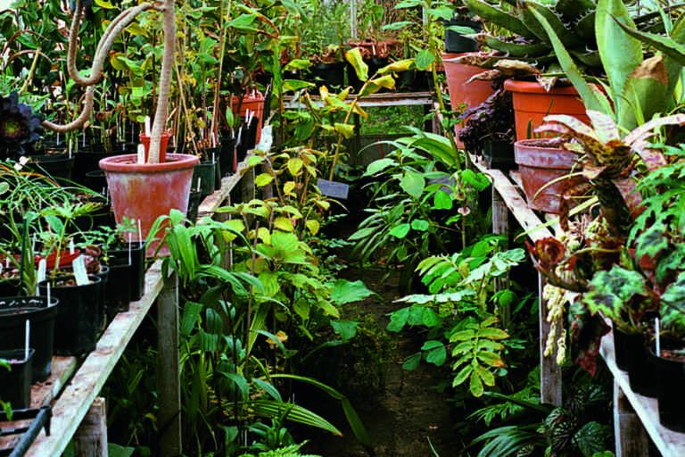 Les serres personnelles de Nick Macer, où poussent des spécimens rares. Ils seront ensuite cultivés et destinés à la vente.