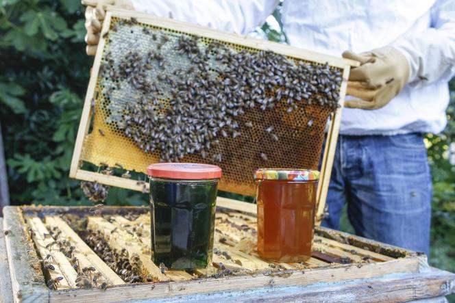 la production française de miel s'est effondrée, passant de plus de 30 000 tonnes en1995 à environ 10000tonnes en2014.
