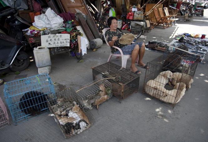 Une marchande vendant des animaux en cage, le 17 juin, dans les rues de Yulin, en Chine.