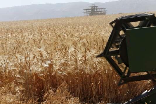 Selon le ministère de l'agriculture, la production française de blé tendre pourrait progresser de 1 % par rapport à 2014, à 37,9 millions de tonnes.