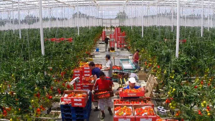 Avec 12 milliards d'euros d'excédent commercial, les exportations agricoles françaises sont celles qui rapportent le plus après l'aéronautique.