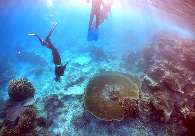 Des plongeurs près de l'île de Lady Elliot, sur la Grande barrière de corail, au large de l'Australie, le 29 juin.
