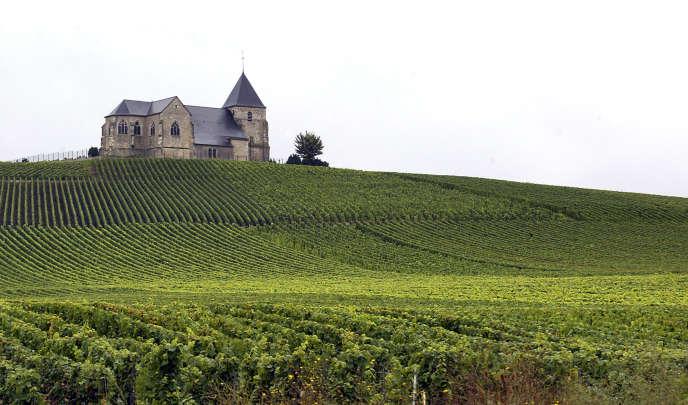 Des vignes de Champagne à Villenauxe-la-Grande, près d'Epernay.