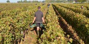 Un travailleur dans un vignoble du bordelais, en octobre 2014.