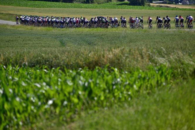 Le peloton lors du Tour de France 2015.