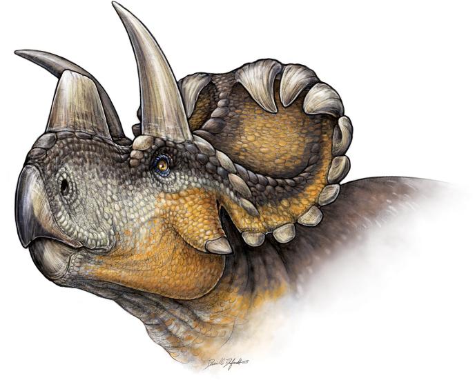Vue d'artiste du wendicératops, qui a vécu il y a 79 millions d'années.
