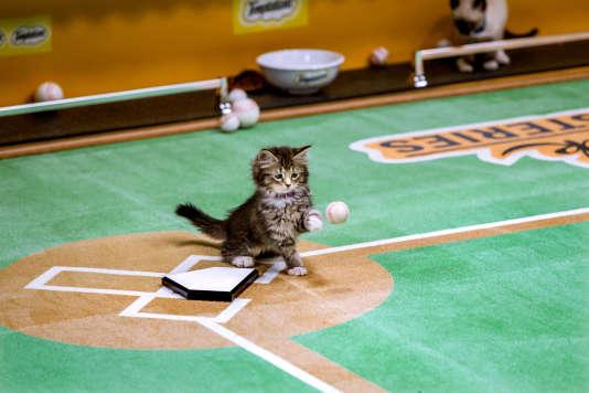 Un chaton mis en scène sur un terrain de baseball, à New York.
