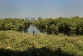 En Inde, le projet de ligne à grande vitesse va détruire de précieuses mangroves