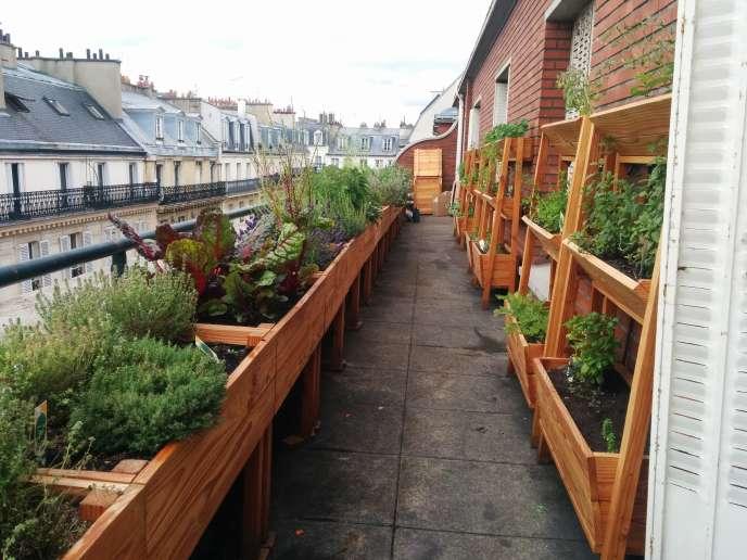 Le jardin potager de l'école de cuisine de Ferrandi accueille des variétés fragiles qu'il faut cueillir à la dernière minute.