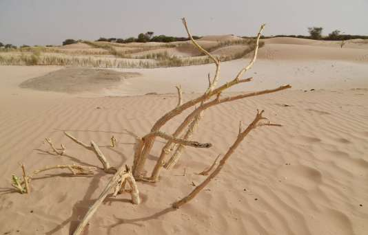 Menacé par le désert qui a colonisé plus de deux tiers de son territoire, le Niger favorise sa production de gaz pour freiner la coupe de bois illégale, qui est actuellement le principal combustible utilisé par ses habitants.