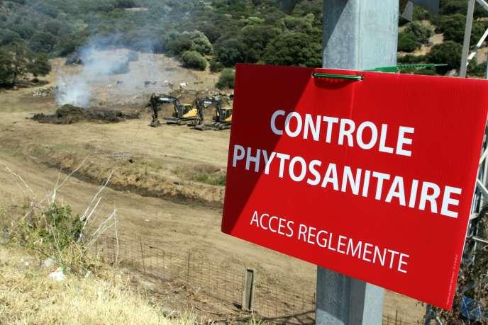 Destruction de plantes dans la zone contaminée, près de Propriano, en Corse, le 27 juillet.