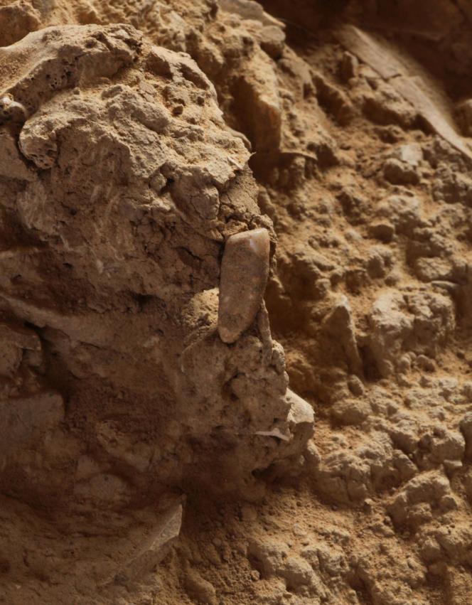 Cette dent serait le plus ancien reste humain de France.