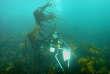 Biologiste de la station marine de Roscoff, au milieu d'un champ de laminaires.