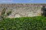 La tombe des frères  Vincent et Théo Van Gogh à Auvers-sur-Oise (Val d'Oise).