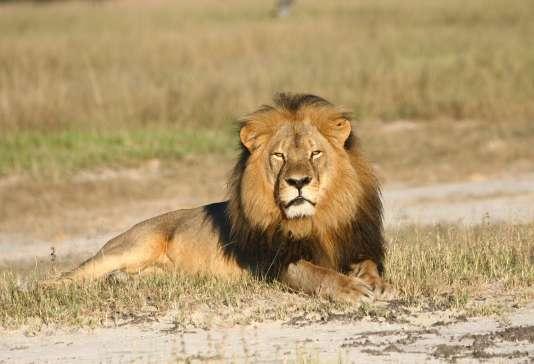 Cecil le lion sur une photo non datée.