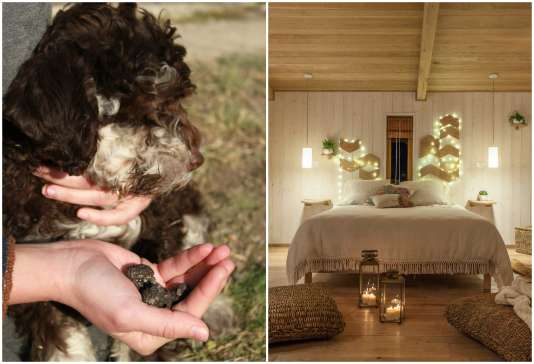 La chienne chasseuse de truffes du domaine. Vue de l'intérieur de l'une des deux cabanes.