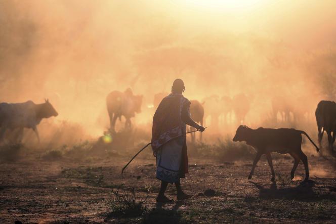 Un Massaï, avec son troupeau.