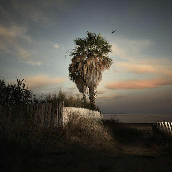 Un palmier sur la côte méditerranéenne française, le 23 juillet.