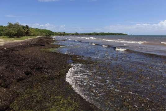 A quelques mois de la haute saison touristique, certains responsables de la région ont appelé à une réunion d'urgence de la Communauté caribéenne, qui regroupe 15 pays.