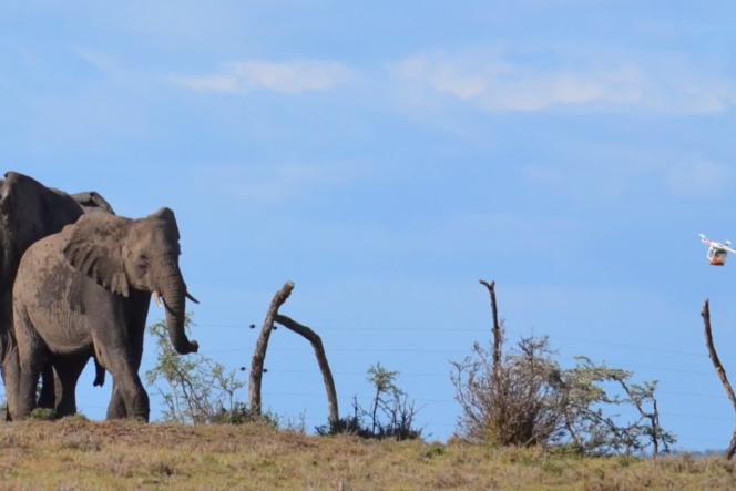 Un drone de l'équipe Resolve disperse un groupe d'éléphants, en Tanzanie.