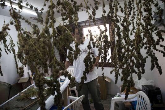 Juan Vaz, 48 ans, un des leaders de la campagne pour la légalisation du cannabis, à Montevideo, le 24 avril.