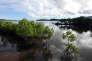 Paysage de mangrove de l'île de Palawan aux Philippines en avril 2012.