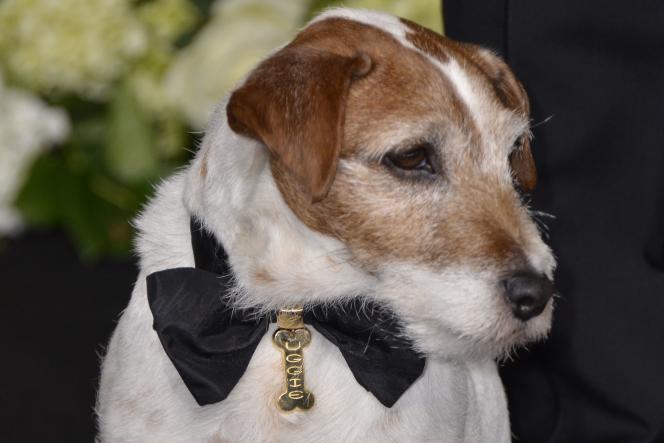 Le terrier Jack Russel, qui s'était fait connaître au côté de Jean Dujardin en 2011, souffrait d'un cancer de la prostate.