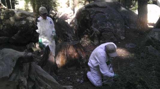 Un deuxième touriste a contracté la peste après avoir visité le parc national Yosemite en Californie, l'un des plus populaires des Etats-Unis.