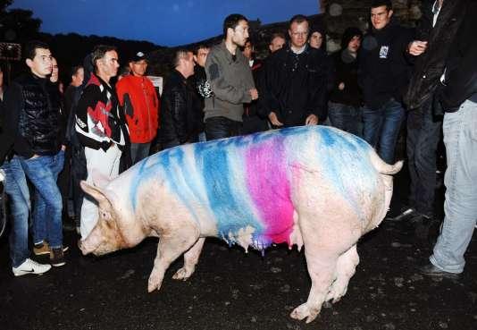 Un cochon peint par des éleveurs lors d'une manifestation devant la sous-préfecture de Morlaix en Bretagne, le 13 août 2015.