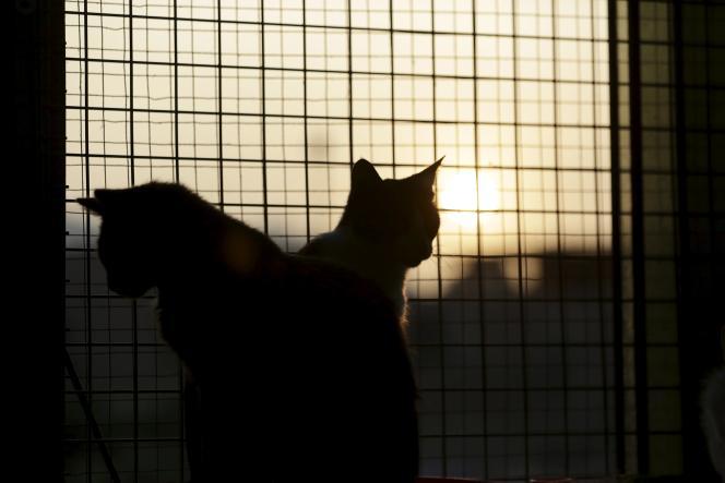 Plus de 1 600 chats ont été abandonnés durant le mois de juillet en France.