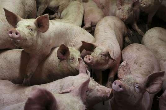 Stéphane Le Foll, dont la gestion de la crise porcine est critiquée par l'opposition, a promis de défendre les intérêts de la filière française sur le front européen.