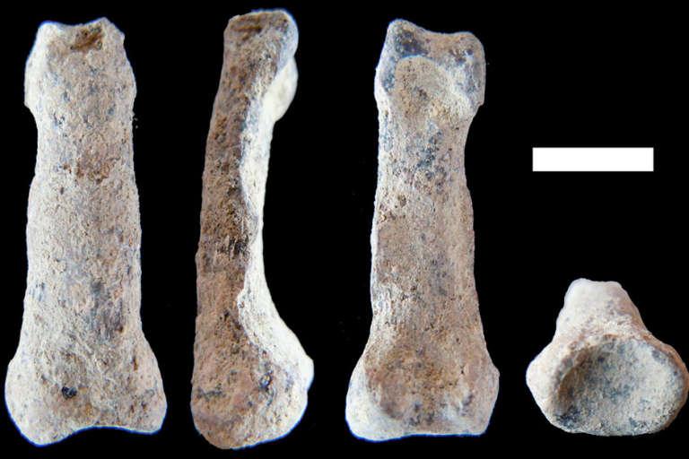 La phalange datée d'1.8 million d'années retrouvée dans les gorges d'Olduvai est de la même taille que celle d'un Homo Sapiens.