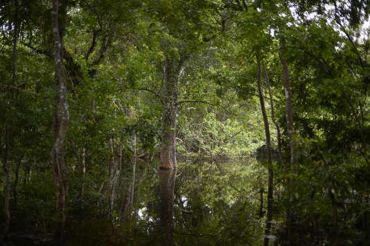 Une forêt du Guatemala.