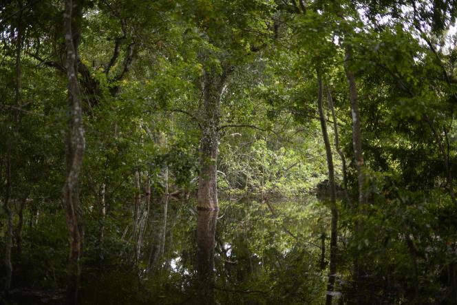 Une forêt du Nord du Guatemala.