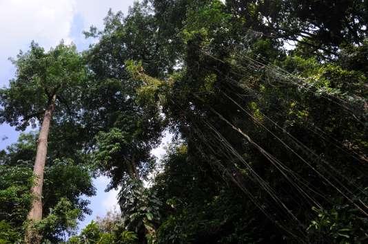 Soixante-deux pour cent de la perte de couverture arborée en 2014 s'est faite dans des pays autres que le Brésil et l'Indonésie, les deux pays les plus touchés historiquement par la déforestation.