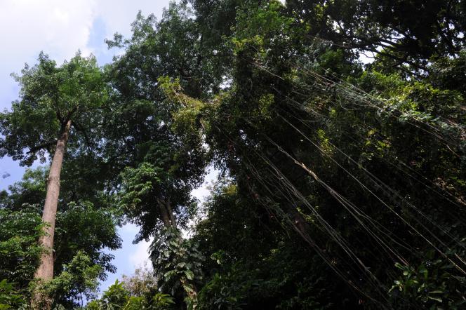 Forêt tropicale en Indonésie.