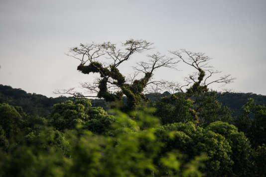 Les forêts tropicales représentent plus de la moitié du patrimoine boisé mondial et le principal foyer de biodiversité.