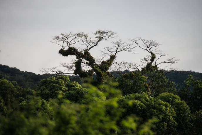 Près de la réserve de Salto Morato, au Brésil, en 2012.