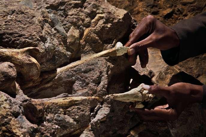 Radioisotope utilisé dans la datation des fossiles