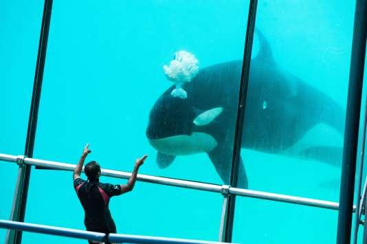 Le Marineland d'Antibes, un parc à thèmes marin, et ses orques.