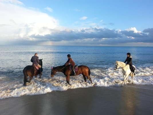 Les chevaux du centre équestre Christian Laborde, sur la plage de Pampelone.
