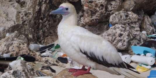 La pollution au plastique atteint en certains endroits le taux record de 580 000 morceaux de plastique par km².