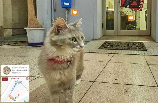Capture d'écran de Cat Street View.